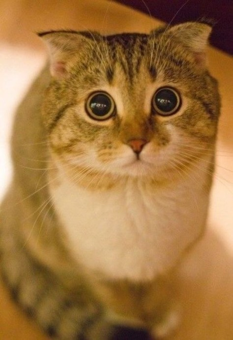 【猫画像】目がまんまる