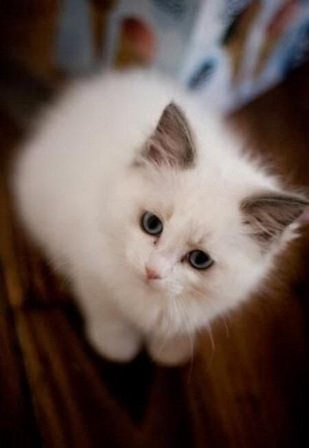 【猫画像】フワフワさMAX