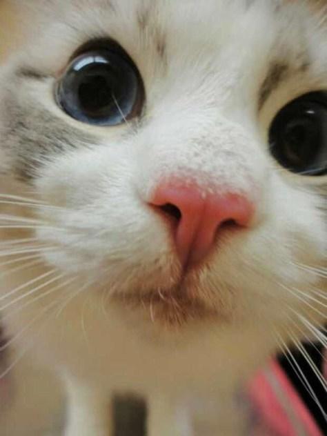 【猫画像】近!