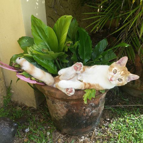 cats_in_plants08