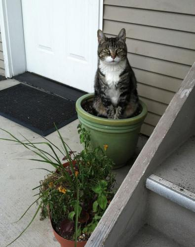 cats_in_plants09