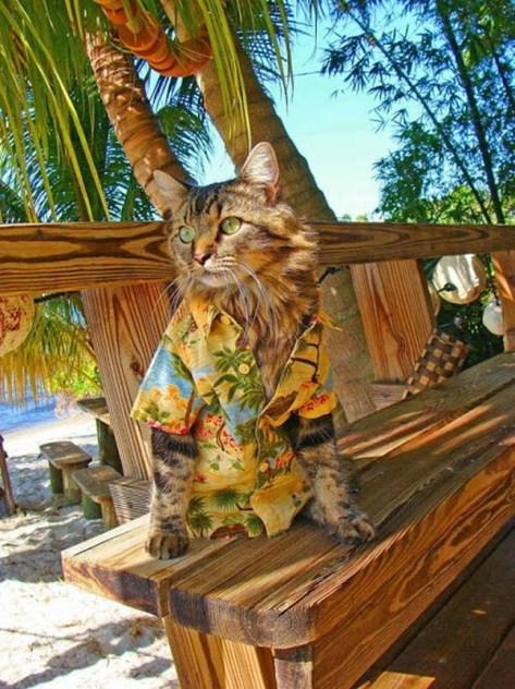 【猫画像】夏が好きそうな猫