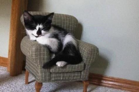 【猫画像】くつろぐ猫