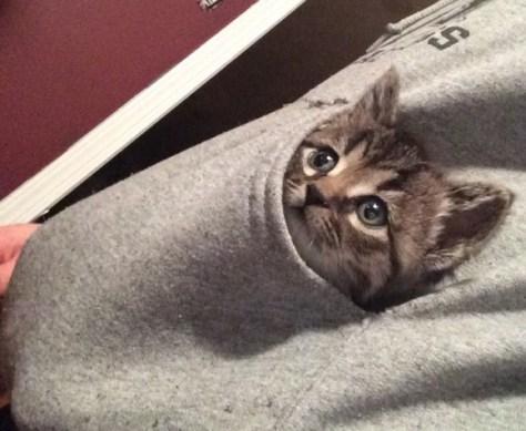 【猫画像】モバイル猫