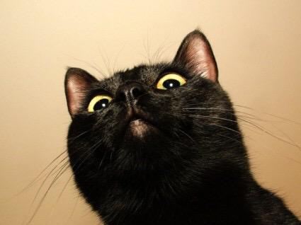 【猫画像】文句あるんかい