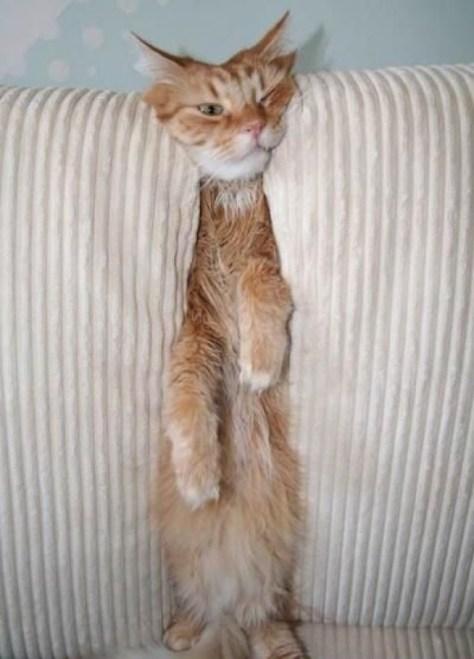 【猫画像】ピンチ