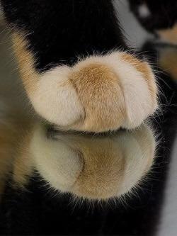 【猫画像】これは何?? パート2