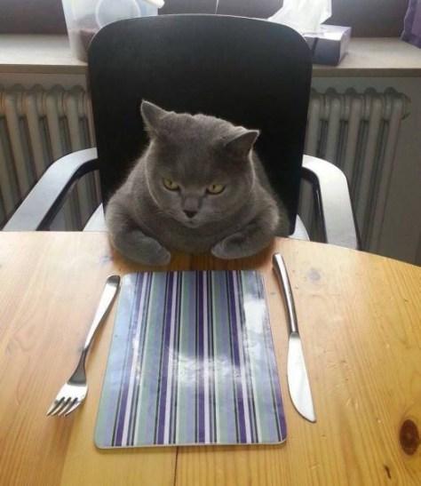 【猫画像】ごはん待ち