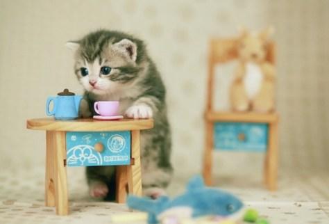 【猫画像】朝ごはんの支度
