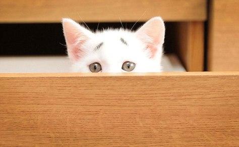 worried_looking_kitten04