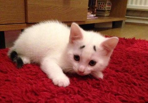 worried_looking_kitten06