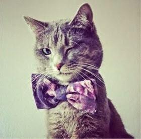 【猫画像】ウインク-☆