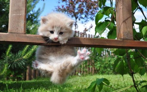 【猫画像】もうちょいっ!