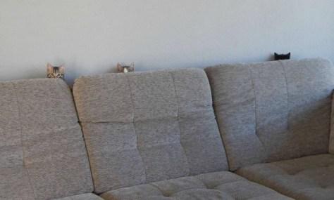 【猫画像】視線が・・・!?