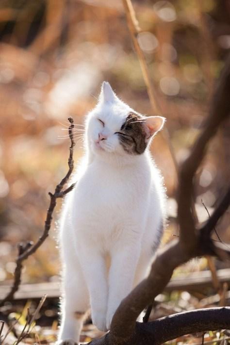 【猫画像】かゆい