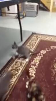 all_kittens_jump01