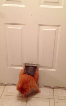 cat_door05