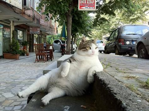 pro_posing_cats09