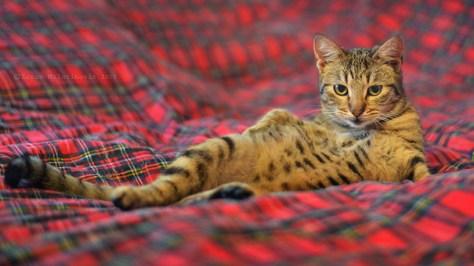 pro_posing_cats12