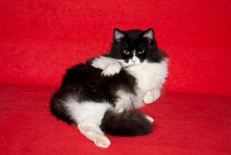 pro_posing_cats14