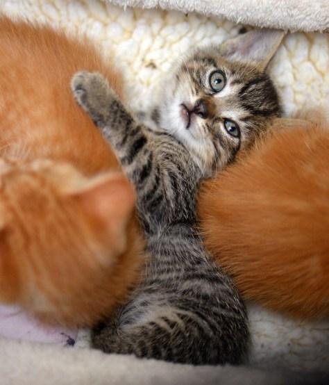 【猫画像】く、苦しい・・・