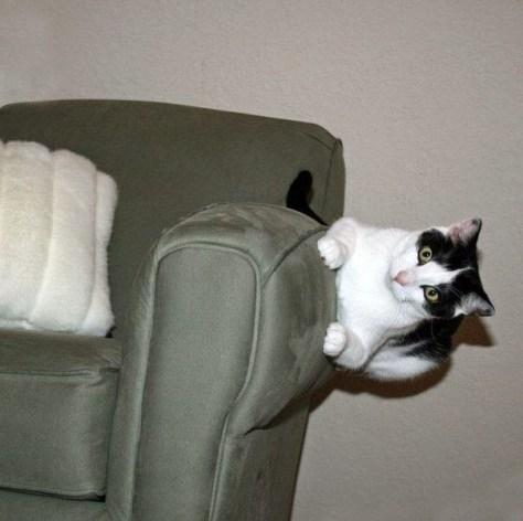 【猫画像】思わず二度見してしまう猫画像 パート12