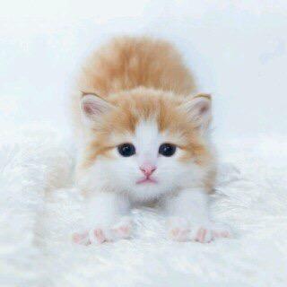 【猫画像】のびーー