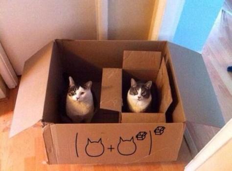 【猫画像】[猫+[猫]]