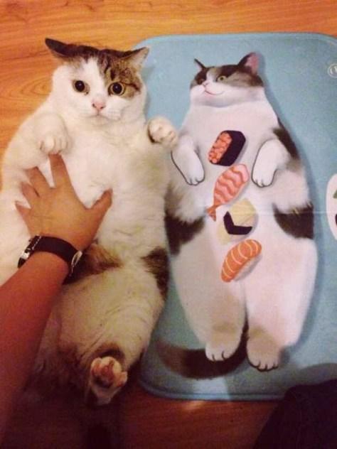 【猫画像】そっくり!?