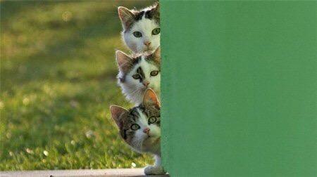 【猫画像】気になるトリオ