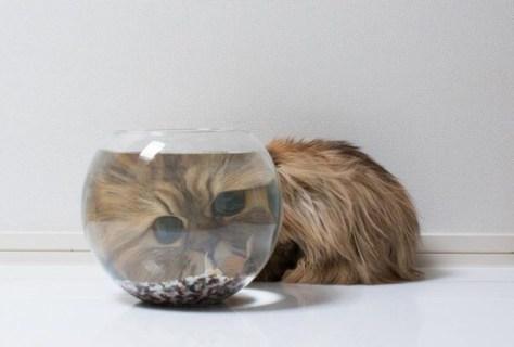 【猫画像】ズームイン