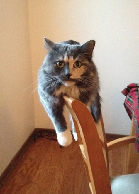 【猫画像】とりあえず降ろして