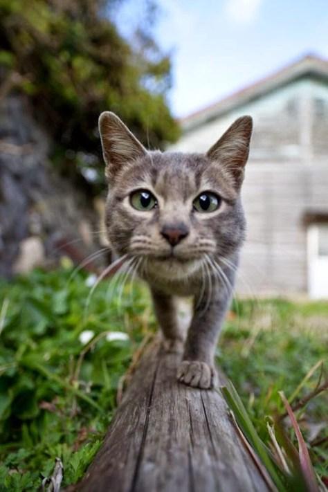 【猫画像】猫どアップ