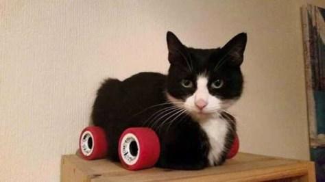 【猫画像】猫ターボ