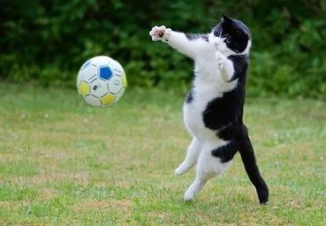 【猫画像】ナイスキャッーーーチ?