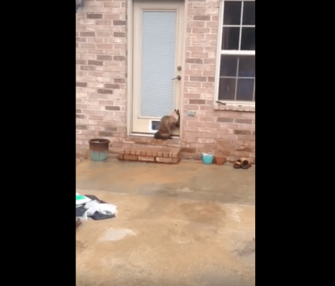 cat_door_fail08