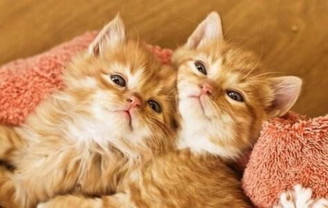 【猫画像】流し目