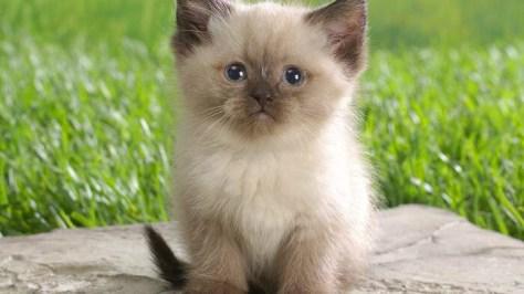 【猫画像】緊張?