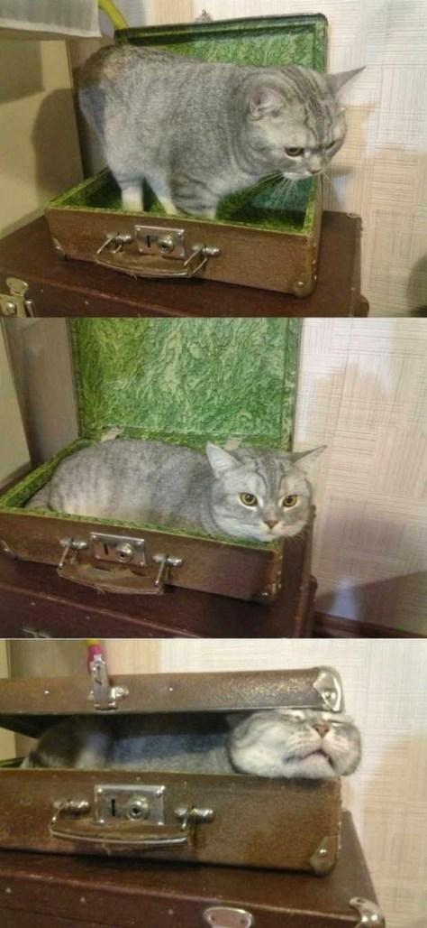 【猫画像】イタイ結末!?