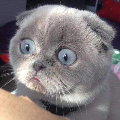 【猫画像】えらいもん見てもうた・・・