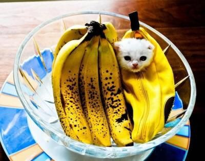 【猫画像】一つだけニセモノ