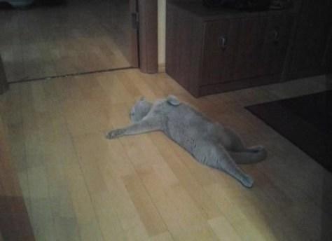 【猫画像】事件現場