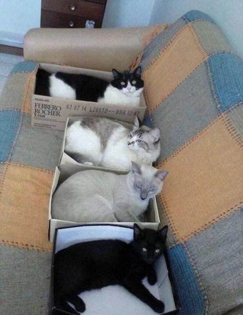 【猫画像】ハコ好き兄弟