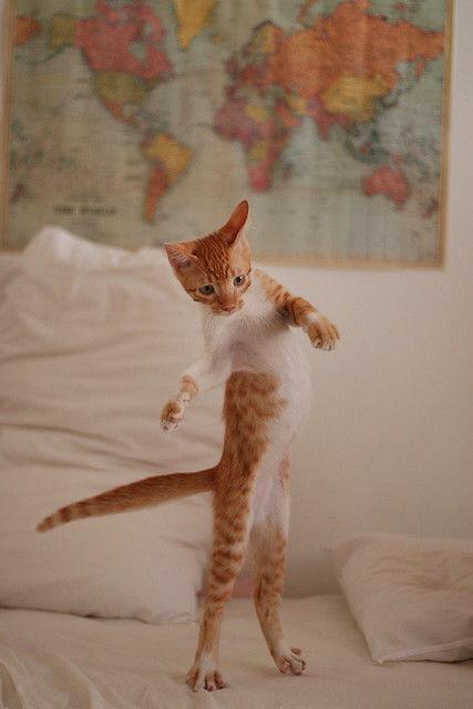 【猫画像】キレキレの動き