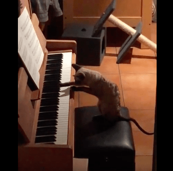 cat_and_piano07