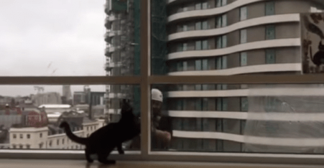 cat_and_window_cleaner07