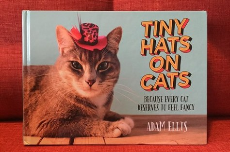 tiny_hats_on_cats00