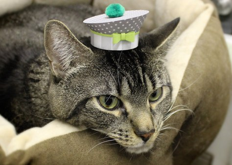 tiny_hats_on_cats04