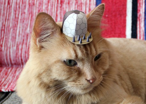 tiny_hats_on_cats06