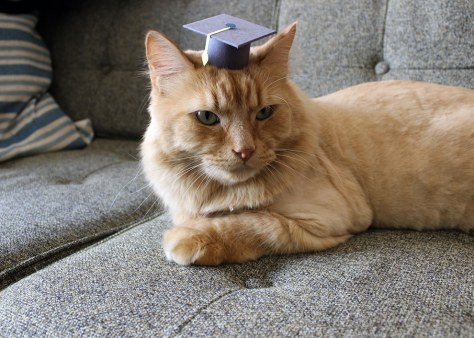 tiny_hats_on_cats11